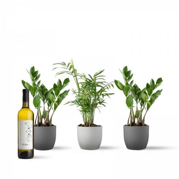 מארז ירוק צמחי בית