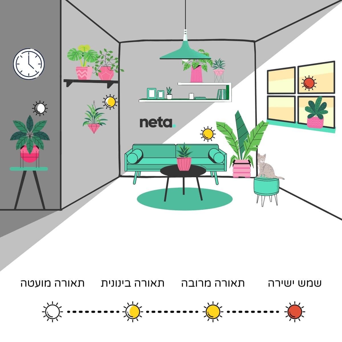 מפת תאורה לצמחי בית