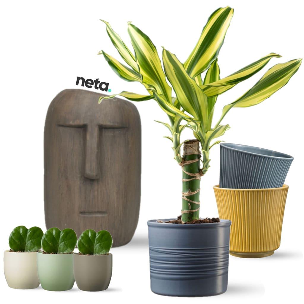משלוחי צמחים ועציצים לבית