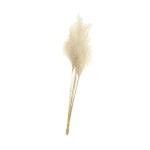 בוקט Silver Grass