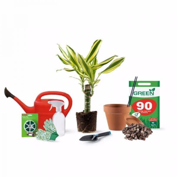 מארז צמחים DIY