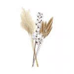כותנה + Silver Grass + Bread Grass