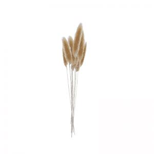 בוקט BREAD GRASS